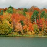 autumn_leaves_scene